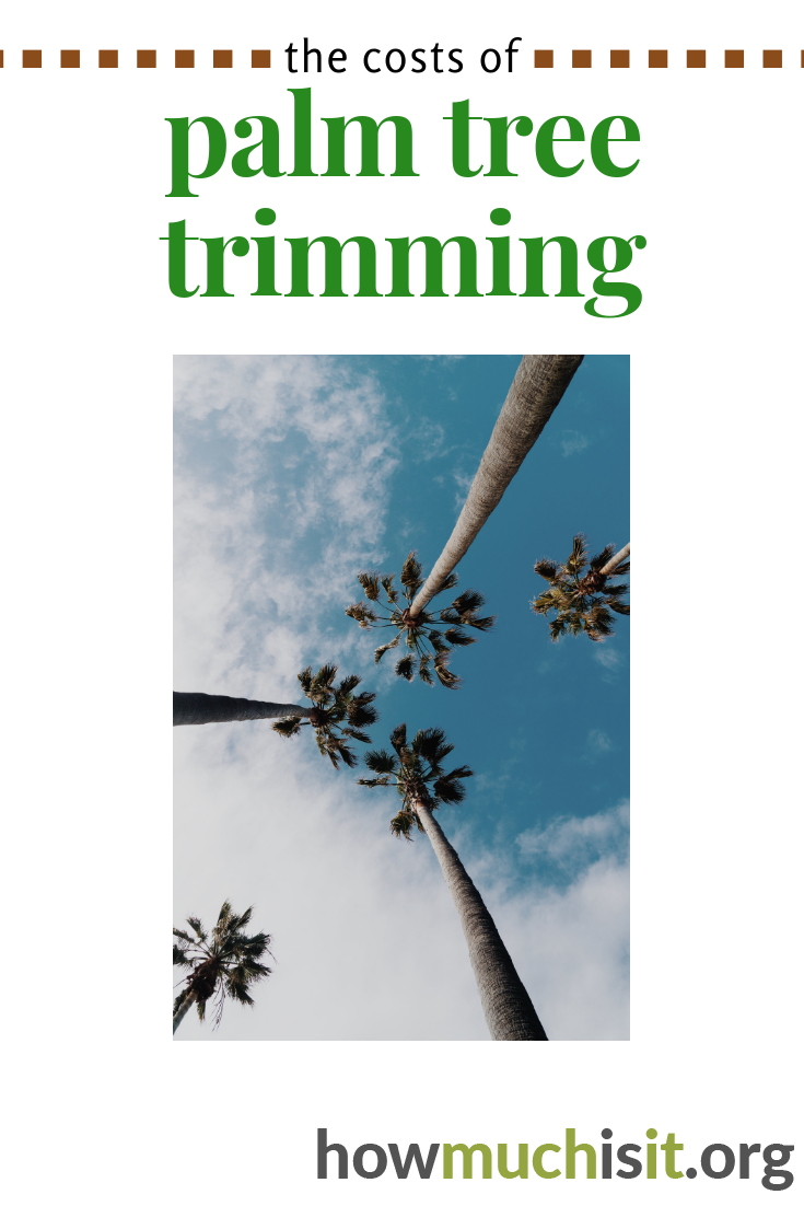 How Much Does Palm Tree Trimming Cost? | Palm tree ...