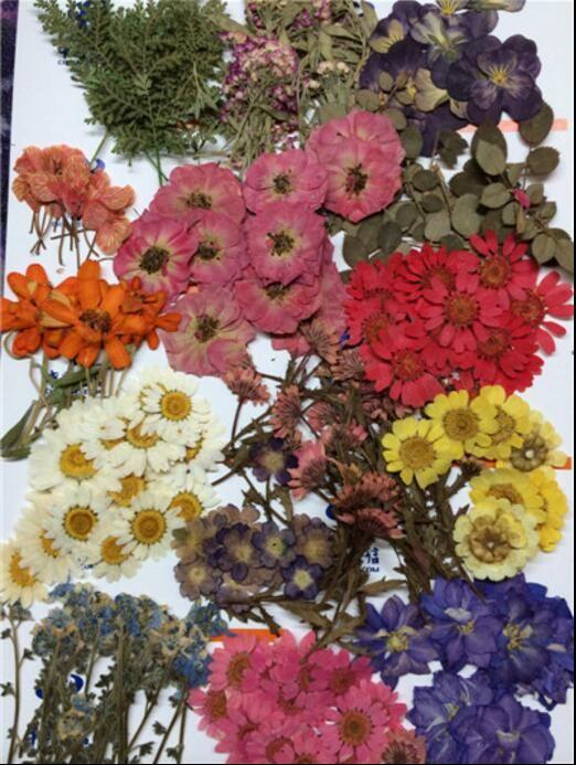 260 unids Surtidos Flores Secas Prensadas Hojas Planta Herbario de - flores secas