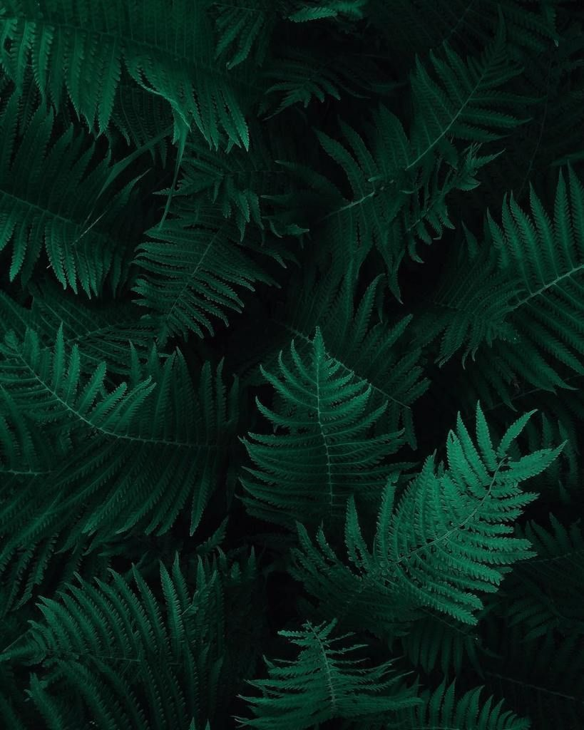 Aesthetic Wallpaper Green And Black