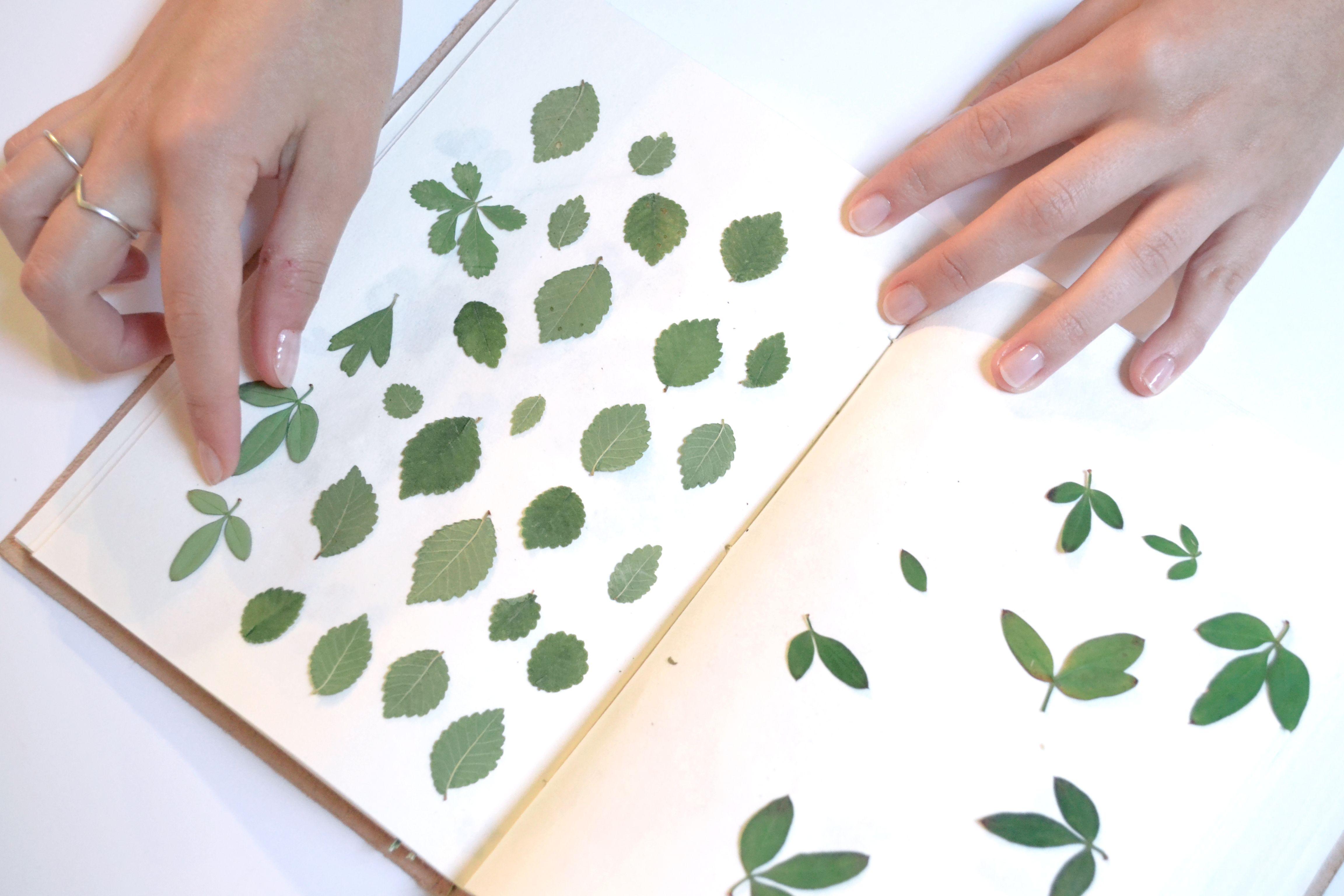 placer les spécimens dans mon cahier. #herbier #carnet #diy