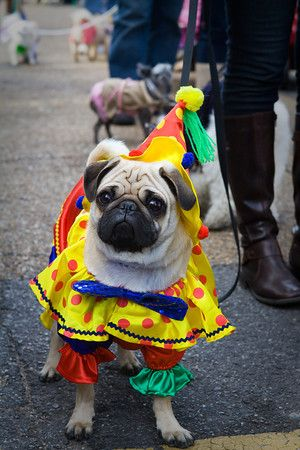 Mardi Gras Is For The Dogs Taken At The Barkus Parade In The