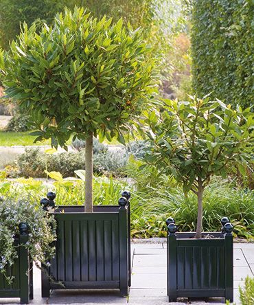 Black Or Deep Forest Green Painted Wooden Planters I 400 x 300