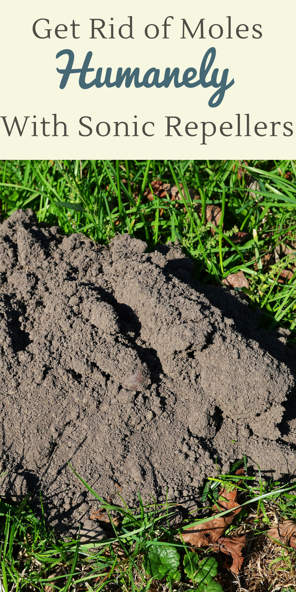 Get rid of moles safely and humanely with sonic mole repellers--learn why Vekibee is the best on the market for ridding your garden of moles!