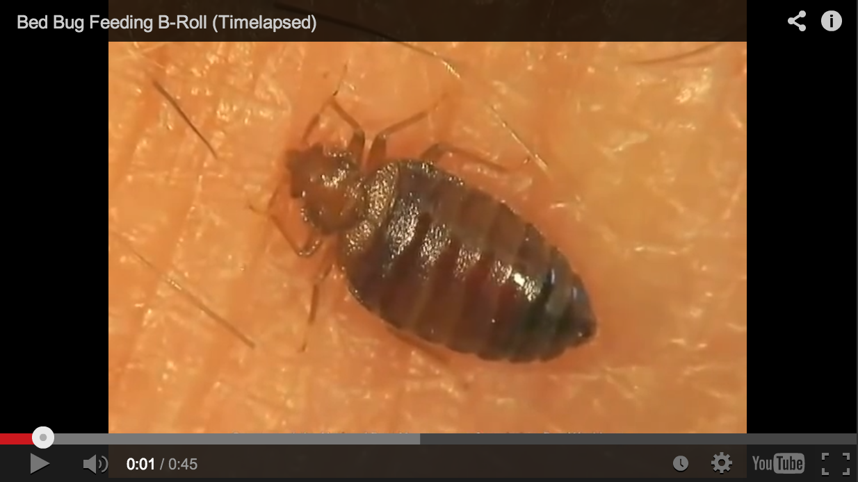 Not For The Faint Of Heart Did You Know Bed Bugs Visibly Grow As