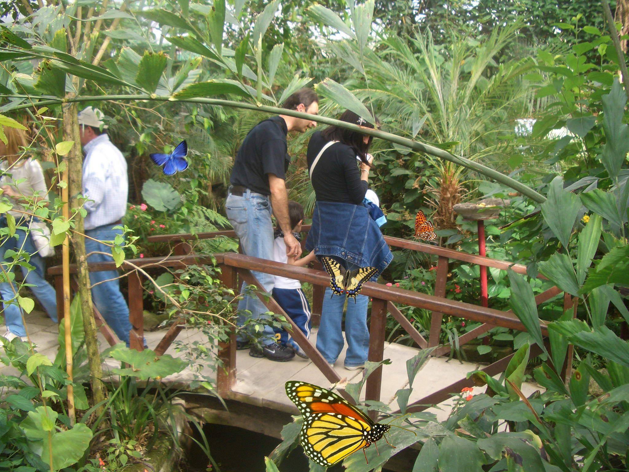Casa delle farfalle bosco delle fate padova week end for Piani casa delle fate