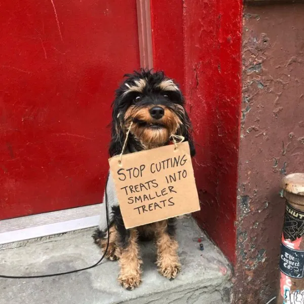 This Protesting Pupper Is Taking A Stand Cute puppies