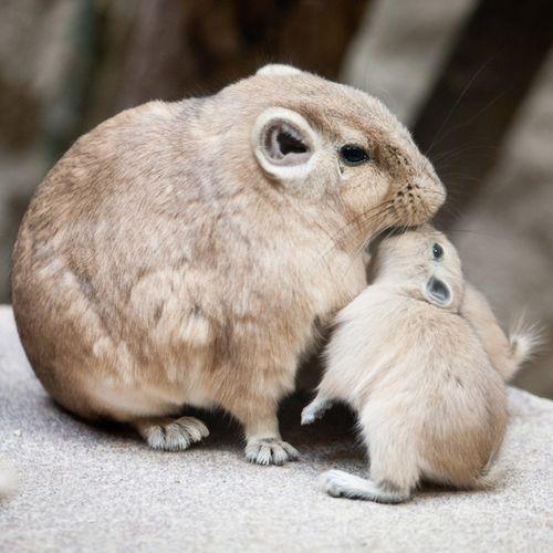 ママと仲良しな動物の赤ちゃん