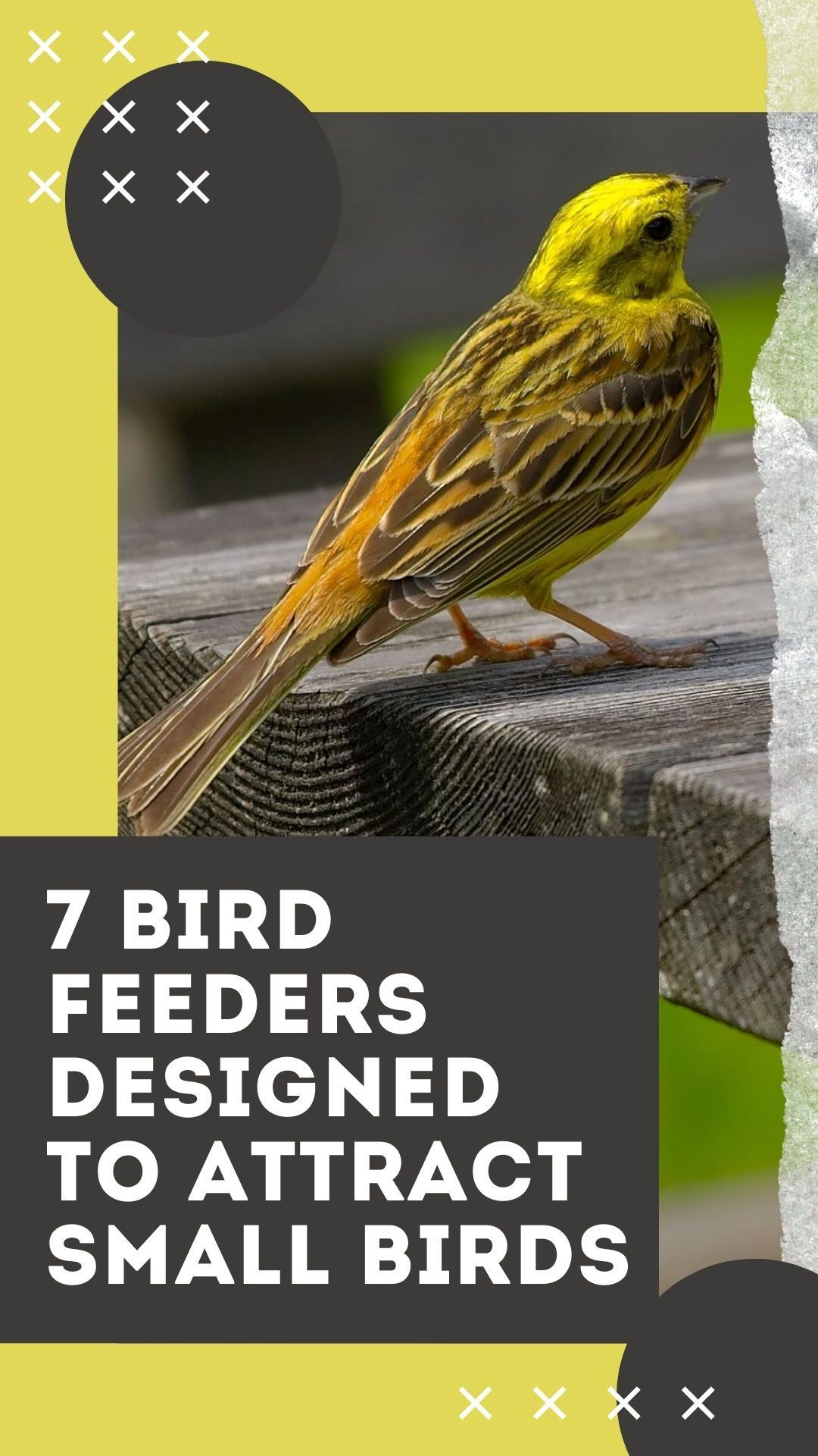 3e7ce80dca86710a7d3f6a44b376f431 - How To Get Rid Of Birds In Your Trees