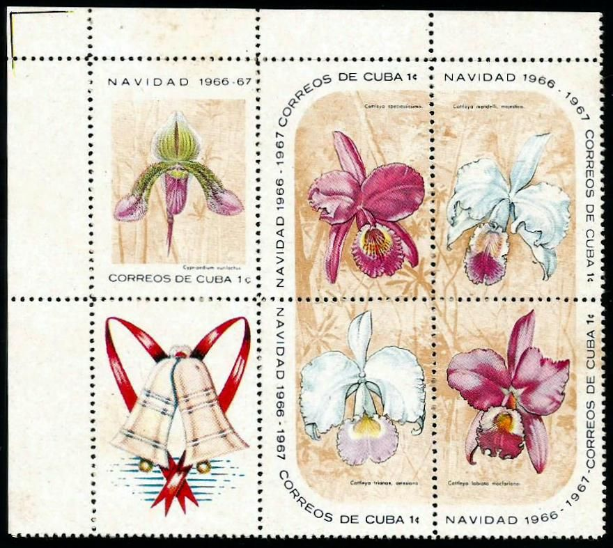 1. Cypripedium eurilochus 2. Cattleya speciosissima 3. Cattleya mendelli majestica 4. Cattleya trianae 5. Cattleya labiata