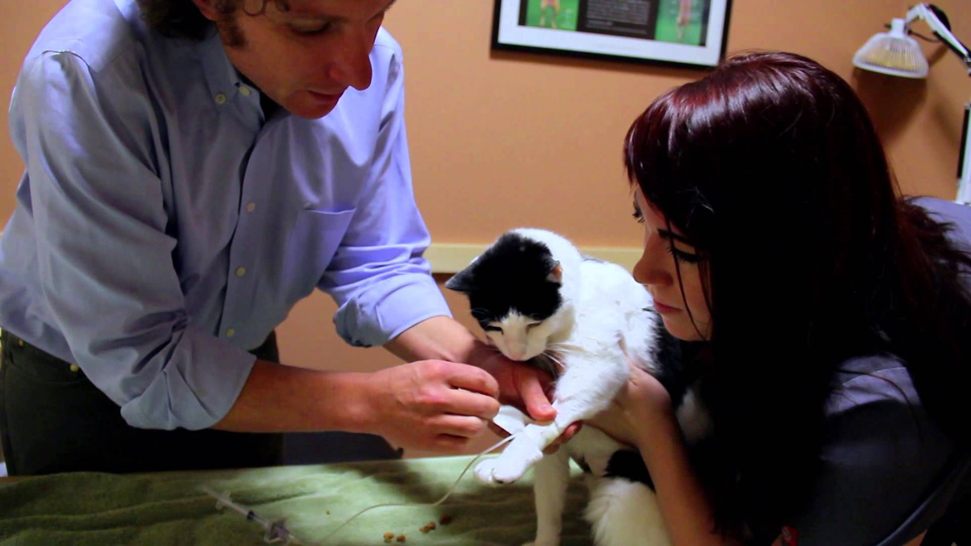 Stem Cell Therapy for Feline Kidney Disease Stem cell