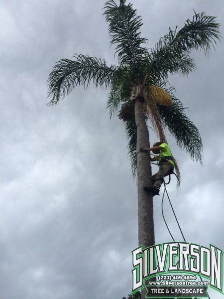 Tree Services Clearwater Fl Tree Service Landscape Services Landscaping Work