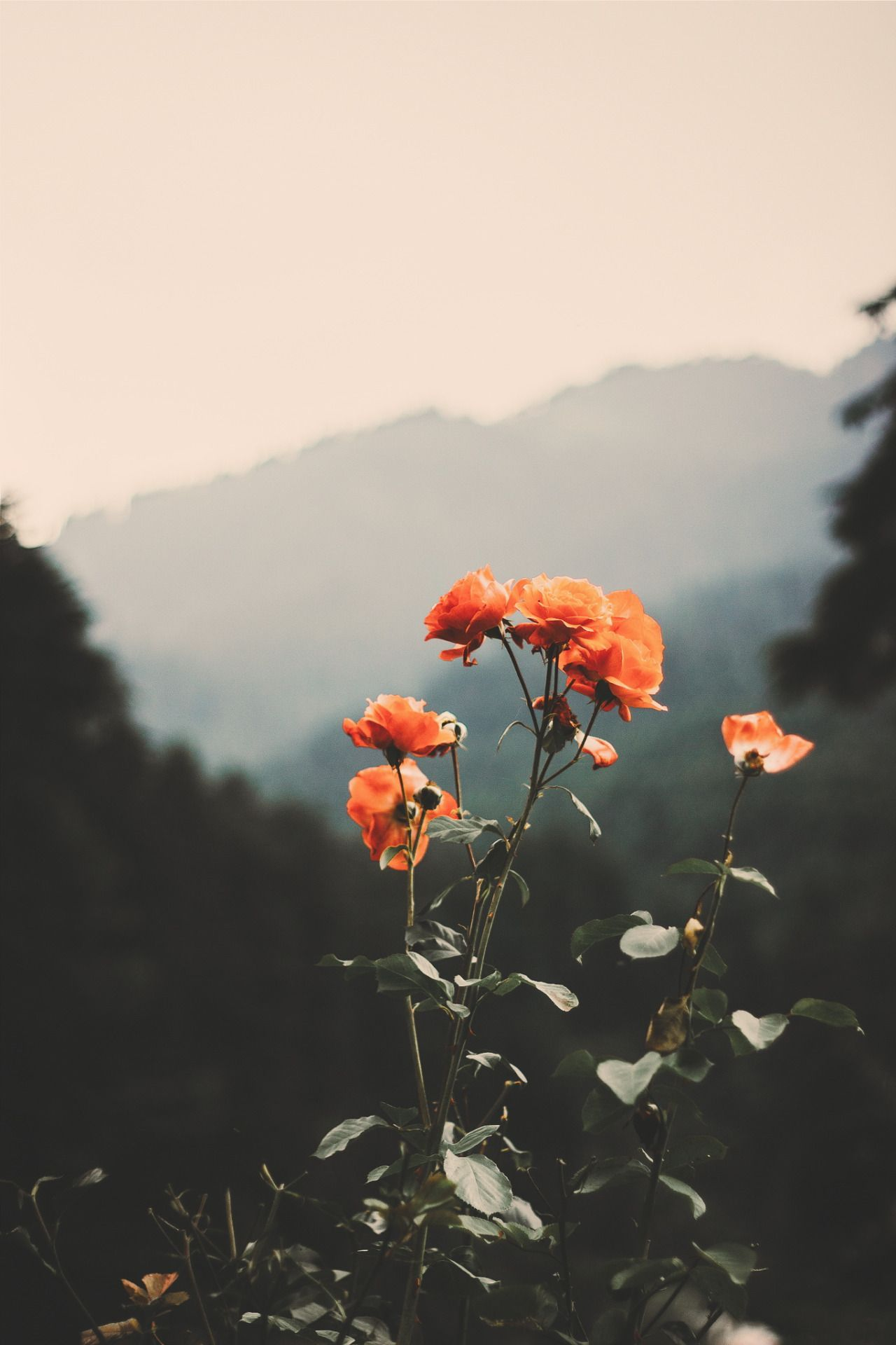 Desvre Nature Aesthetic Nature Photography Flower Aesthetic