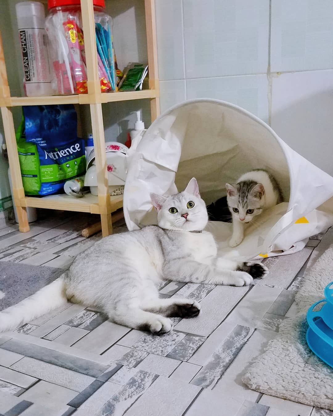 Nghịch Cai Sọt Quần Ao Lien Hồi Noelthecat Minminthecat Cat Cats Catstagram Tabbycat Tabby Tabbykitten Cats Of Instagram Sco Animals