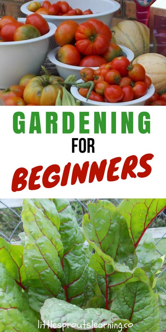 Home Vegetable Gardening for Beginners
