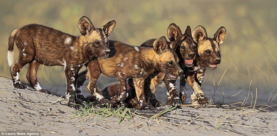 Painter Creates Hyper Real Pictures Of African Wildlife Wild Dogs African Wildlife Animal Paintings