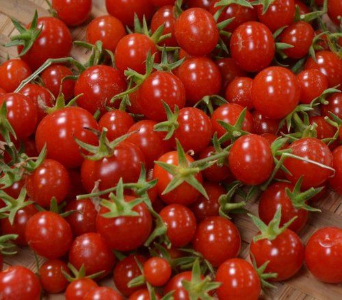 Sweet Million Cherry Tomato 4 Live Plants Up To 2000 Cherries Growing Tomato Plants Growing Tomatoes In Containers Growing Tomatoes From Seed