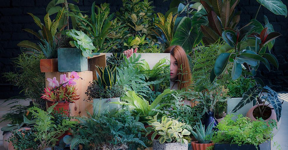Salmiana Plantas