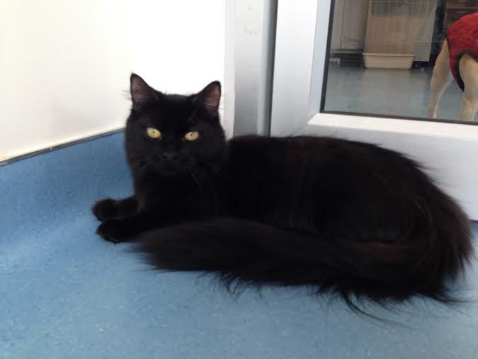 Adopt Mama On Kittens Long Haired Cats Pets