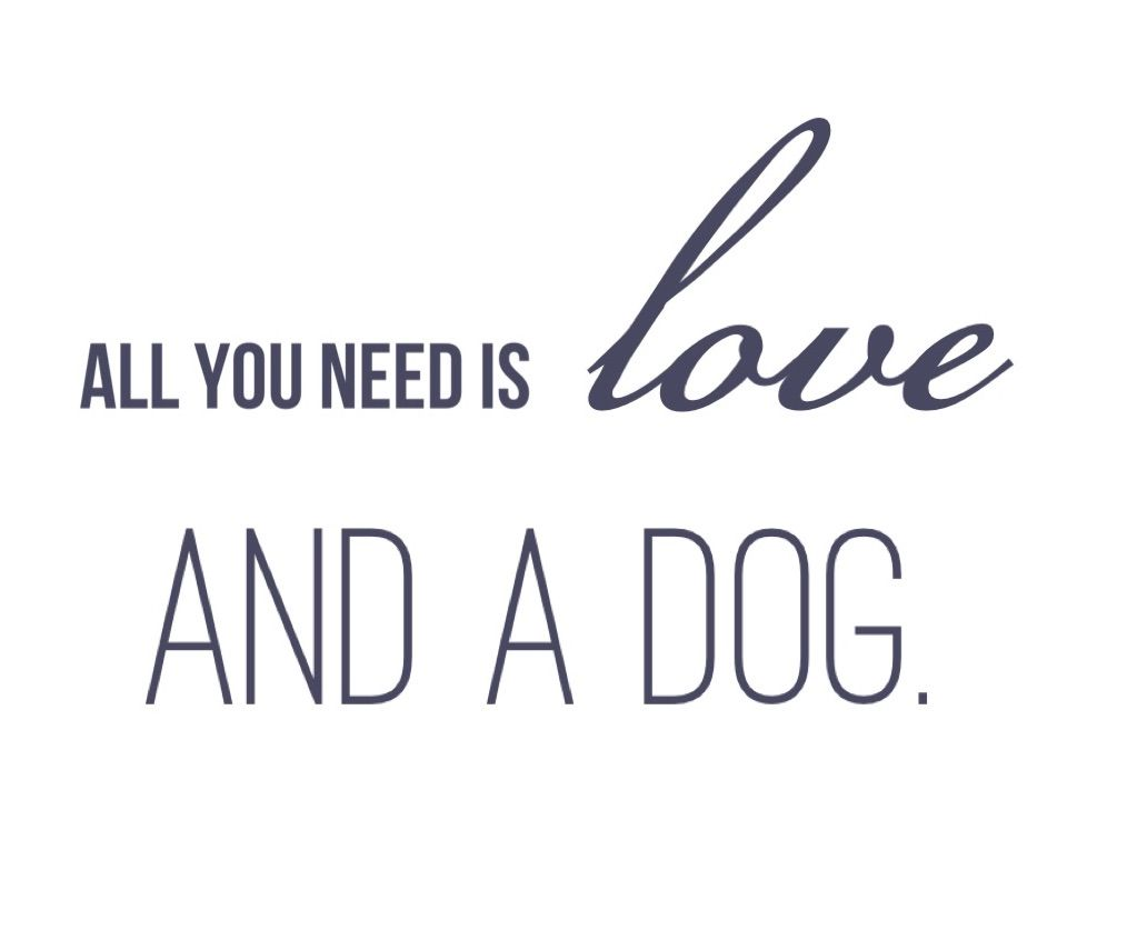 love this dog quote for our new website made using the vintage rh pinterest com