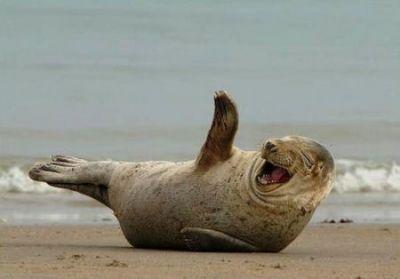 Happy seal pup