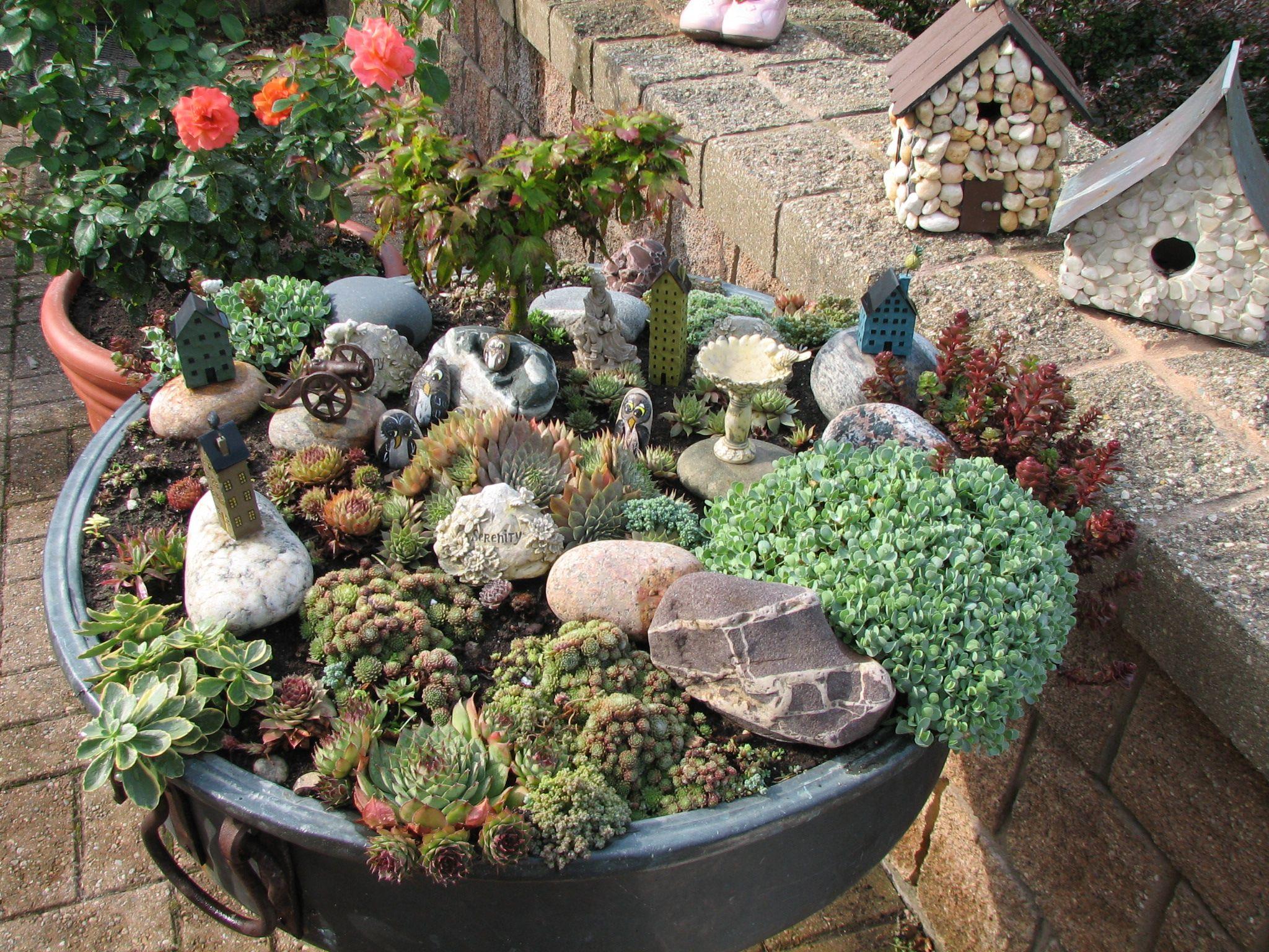 Alpine Plant Garden Mini Garden Miniature Garden Fairy Garden