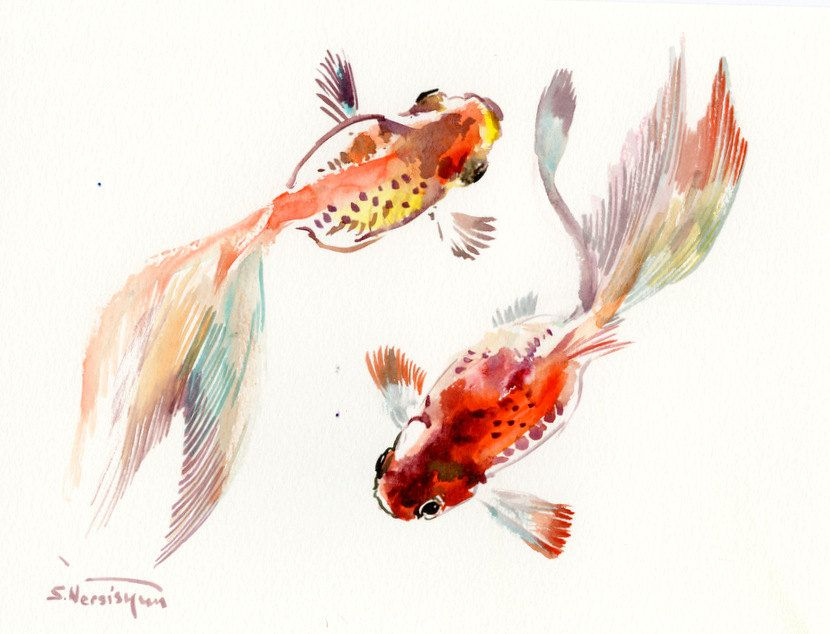 Koi fish original watercolor painting 12 x 9 in fish for Original koi fish