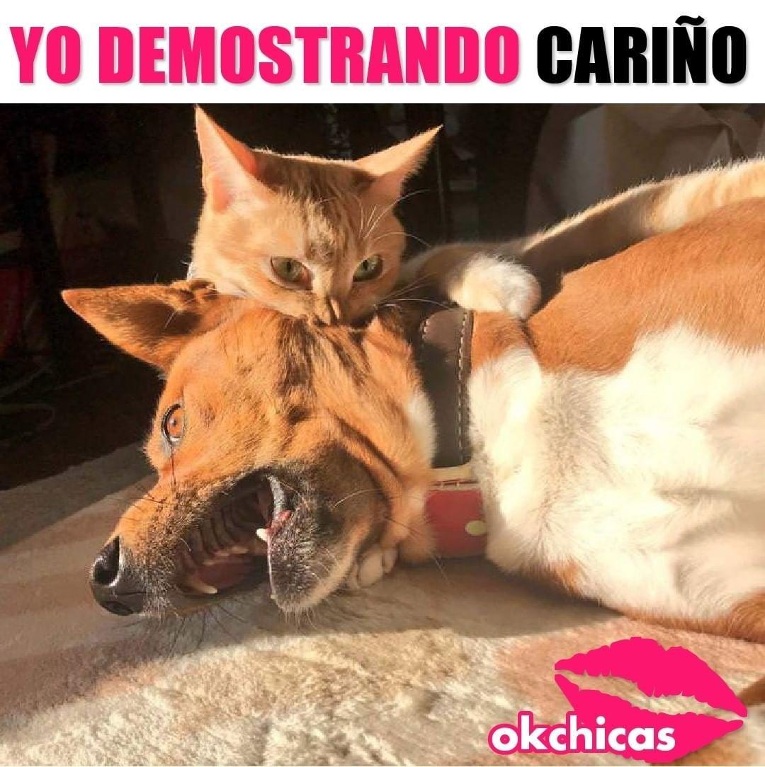 La Imagen Puede Contener Texto Meme Gato Gatitos Divertidos Perros Graciosos