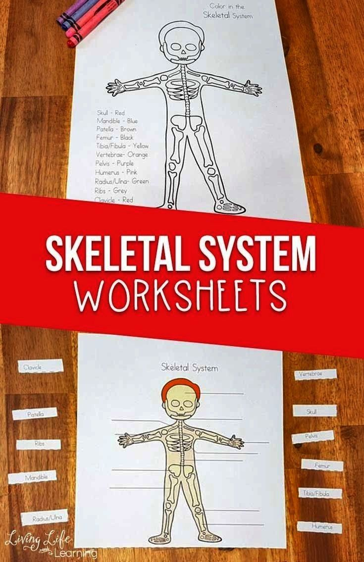 Worksheets for Kids Is your child interested in the human body? Grab these skeletal system workshee