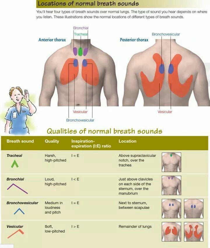3e81e1ef4eb792e0651adf70751976c0 normal breath sound locations medical stuff pinterest lung