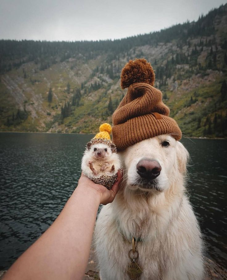 Photo of Unicornio en instagram: los hijos de ganso fríos afuera ahora a los hipsters finalmente les gusta …