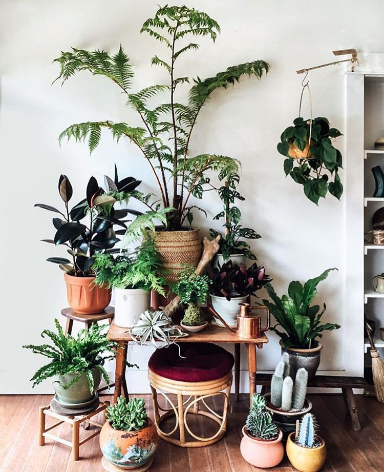 pinterest deco deco plantes plante interieur planter. Black Bedroom Furniture Sets. Home Design Ideas