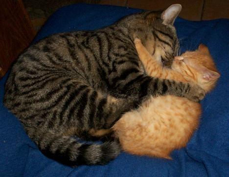 cuddle comments - Bing Bilder