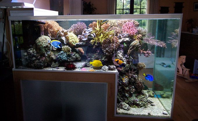 The Drop Off Reef Aquarium Of Philippe Grosjean Reef Aquarium Aquarium Fish Tank Saltwater Fish Tanks