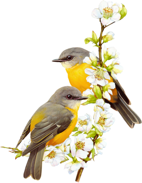 chardonneret   Oiseaux peints, Oiseaux, Art à thème oiseau