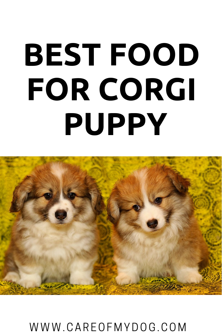Best Food for Puppy puppy, Best puppy