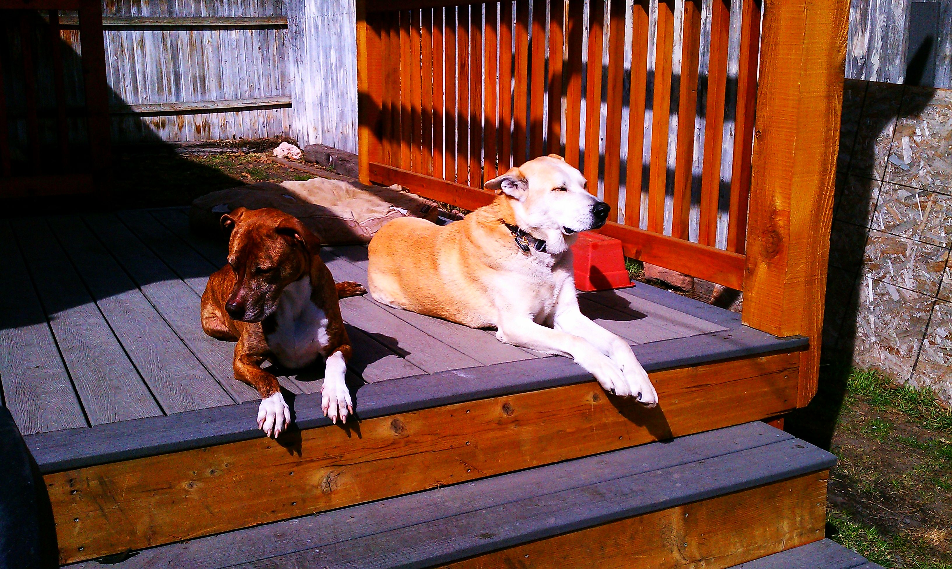 Dog Boarding And Day Care Services Salt Lake City Dogs Pets