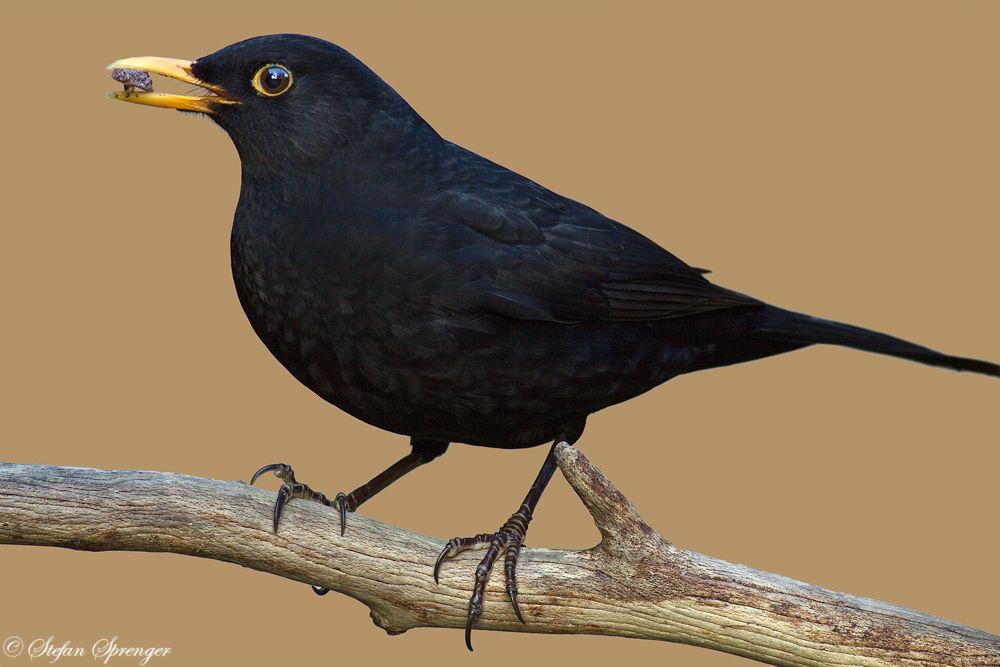 Idee Von Cfluxefab Beauty Auf God S Creatures Birds Vogel Als