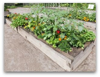 Small Vegetable Garden Plans For Your Family