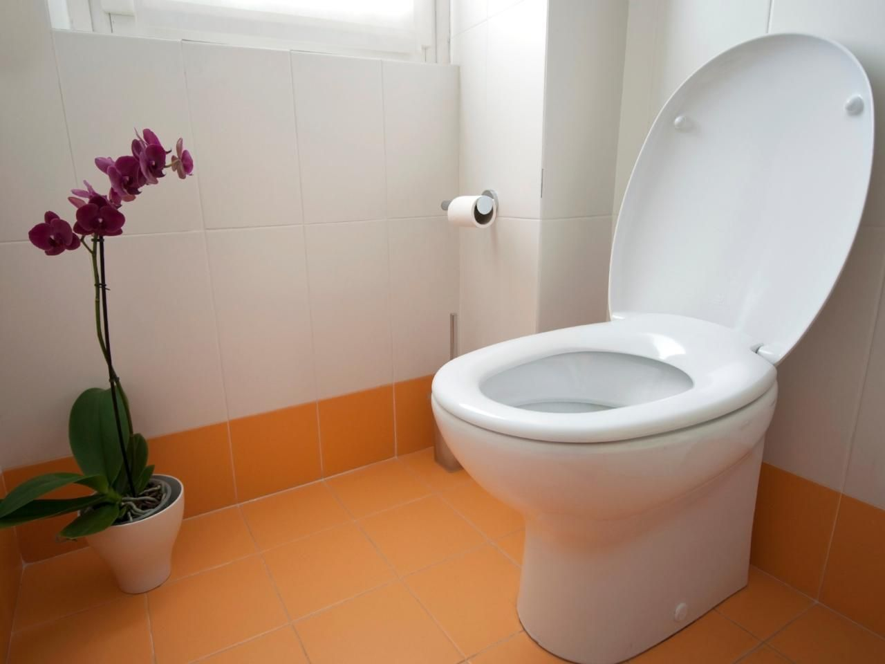 How to remove the old toilet: the technology of dismantling the old plumbing 82