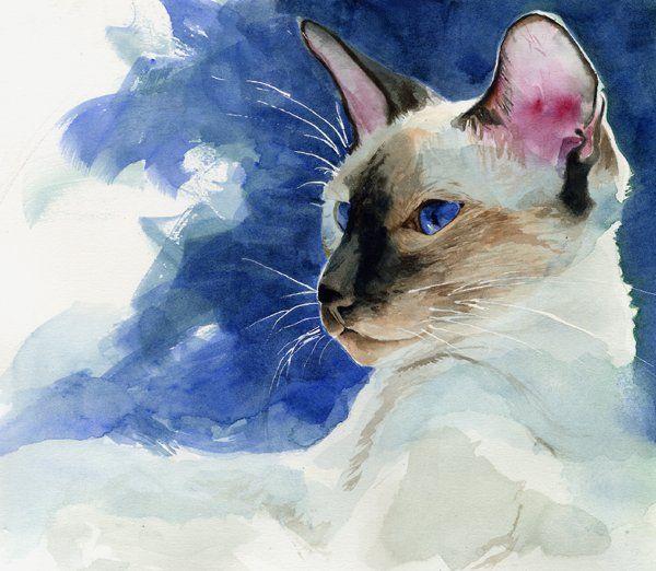 Siamesecat Watercolor Bobbydaleearnhardt.com