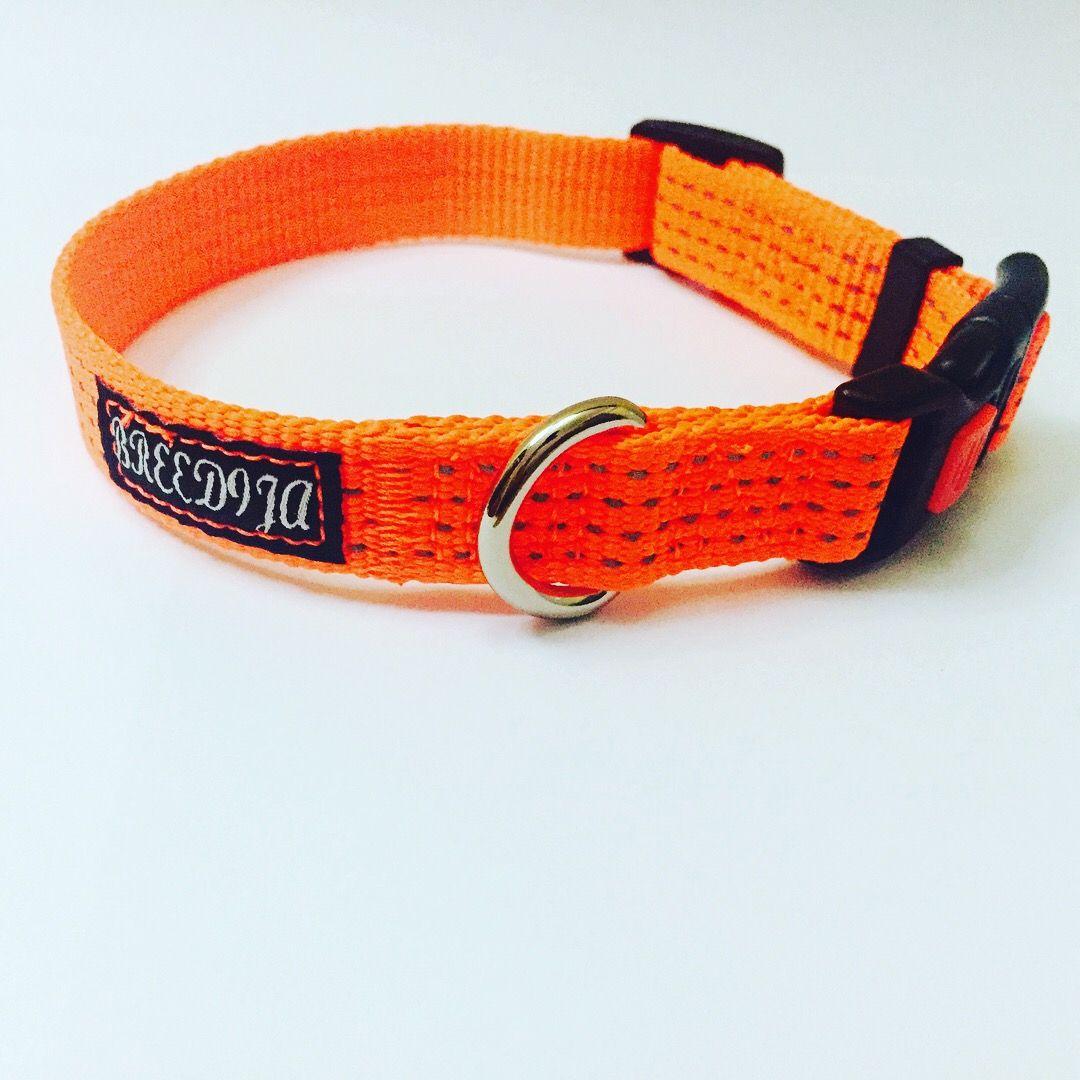 Reflective Safety Dog Collar Dog collar, Reflective