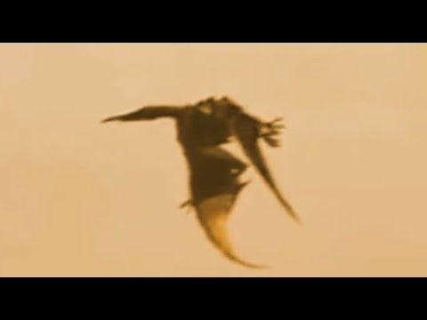 Real Flying Dinosaur - Caught on Video #dragon #dinosaur