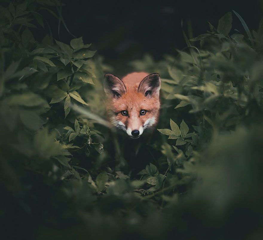 Photographer Captures The Soul Of The Forest With His Unbelievably Intimate…