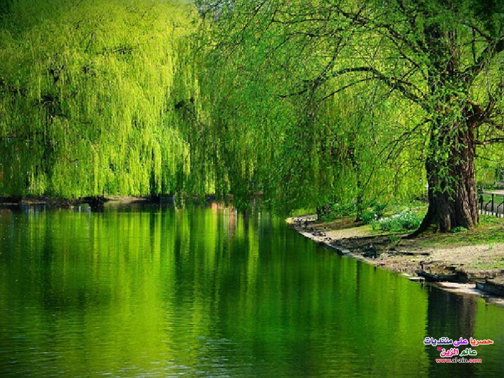 مناظر طبيعية عالمية 2013 مناظر Beautiful Landscapes Autumn Nature Weeping Willow