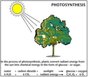 Photosynthesis lifes primary energy source lesson image illustrating photosynthesis with a reaction diagram of the products and reactants of the process ccuart Images