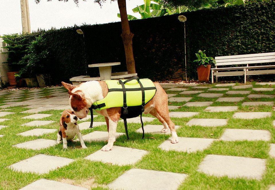 #BullTerrier #Dog #Narong