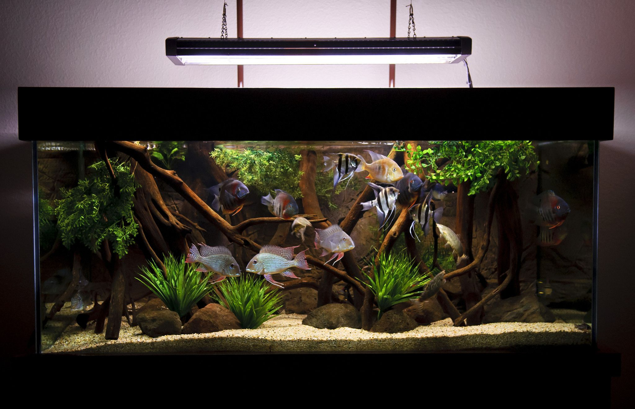 Freshwater aquarium fish info - Diy 190g Cichlid Biotope Tank