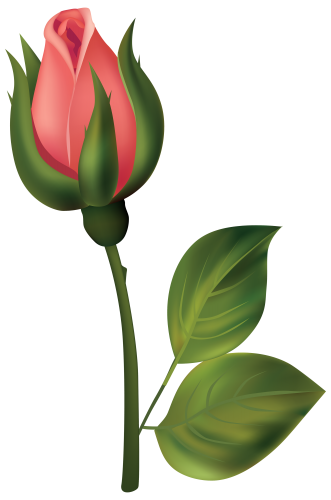 Stem Red Rose Bud Png Clipart Best Web Clipart Rose Buds Beautiful Rose Flowers Flower Clipart