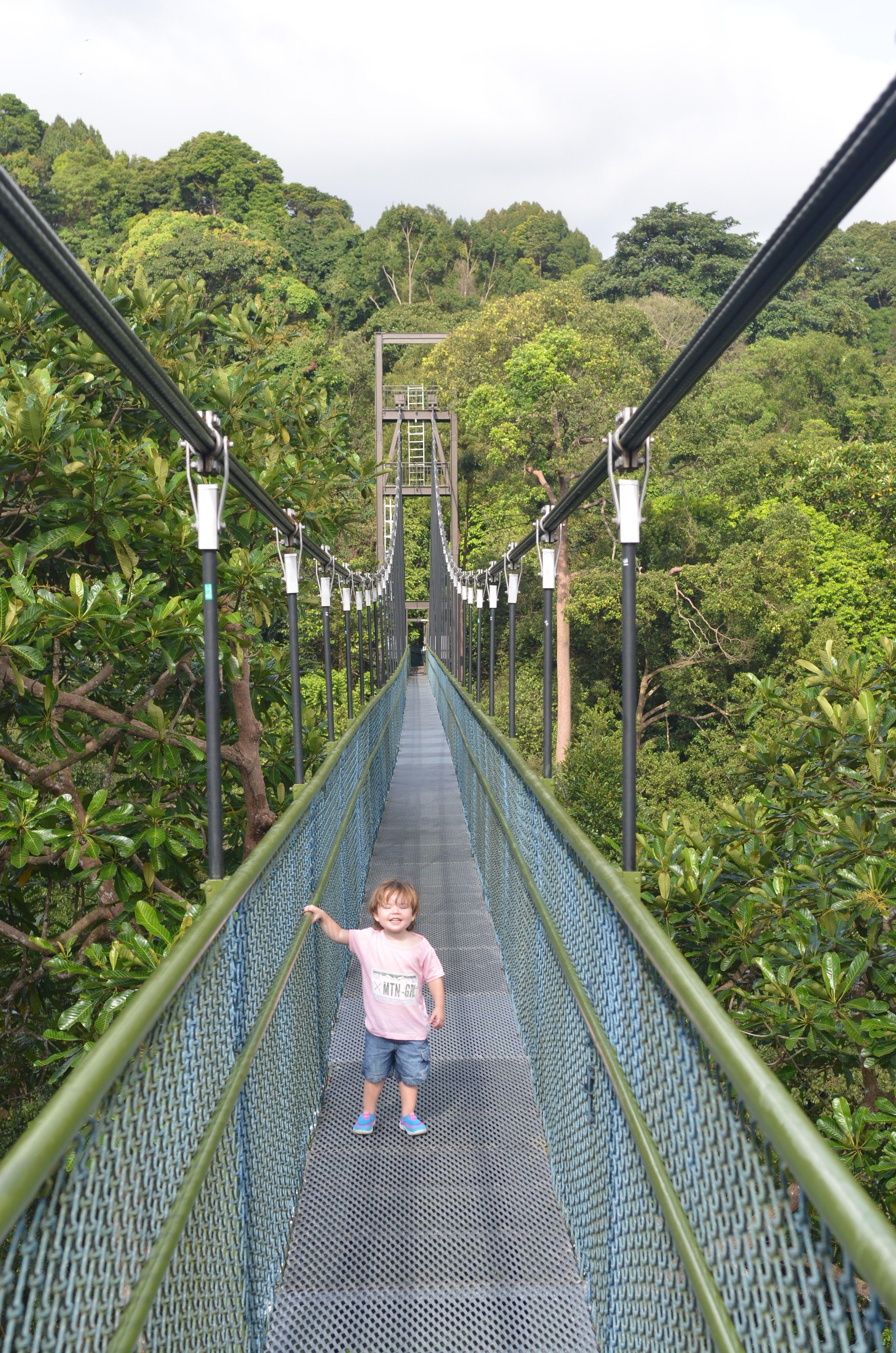 Macritchie Nature Trail Nature Trail Country Roads Singapore Malaysia