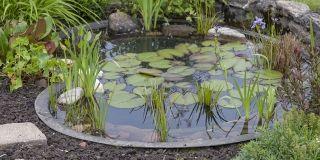 Ein Teich Im Eigenen Garten Schafft Eine Ganz Besondere Atmosphäre. Siedeln  Sich Die Frösche An